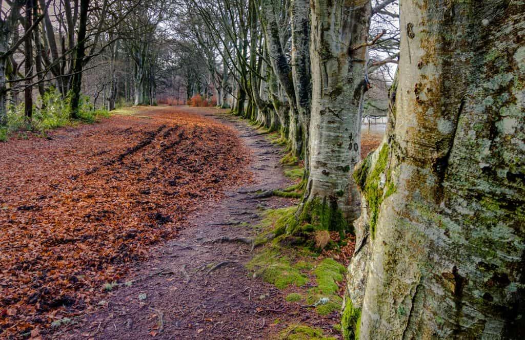 Tree Lined Path at Kenmore