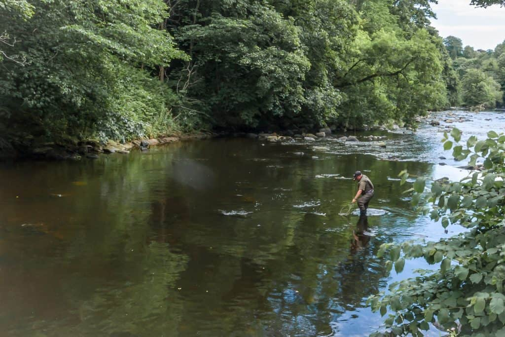 Fishing in the River Almond, Edinburgh