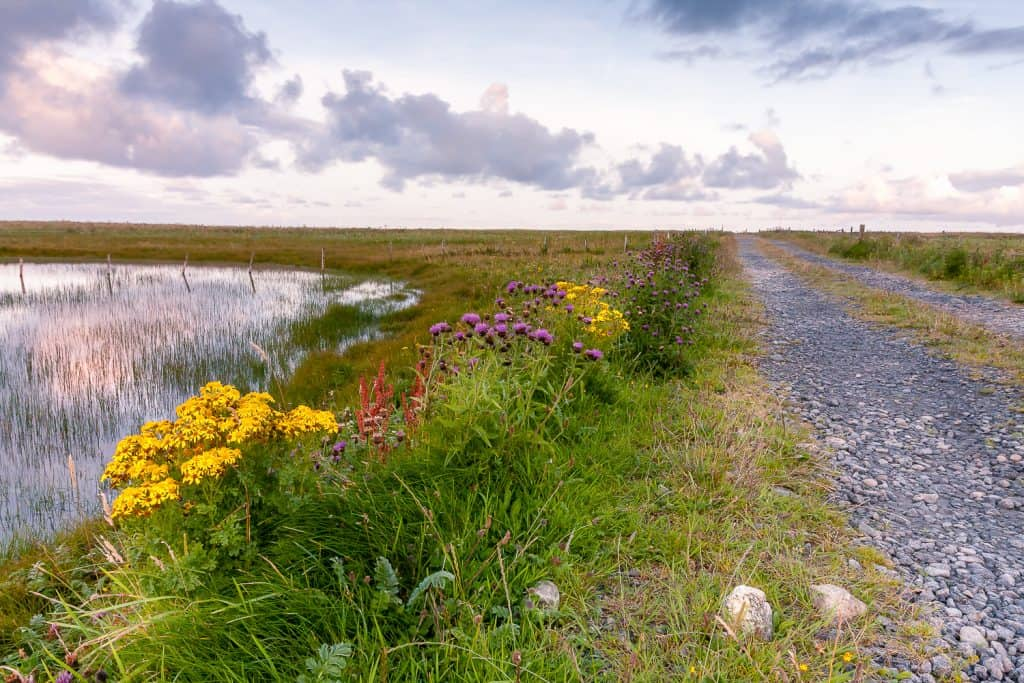 Wildflowers line the track beside Grogarry Loch, South Uist