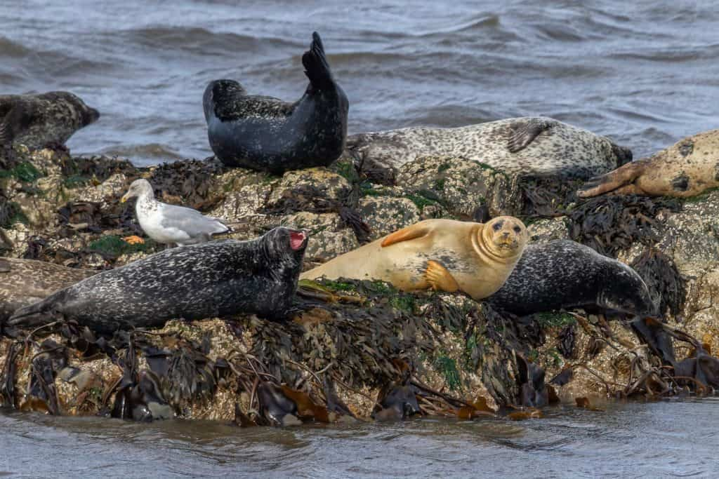 Seals Taking it Easy