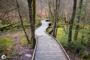The Wooden Walkway