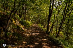The path first leads through woodland