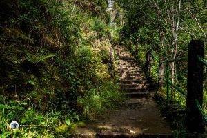 Path with railings