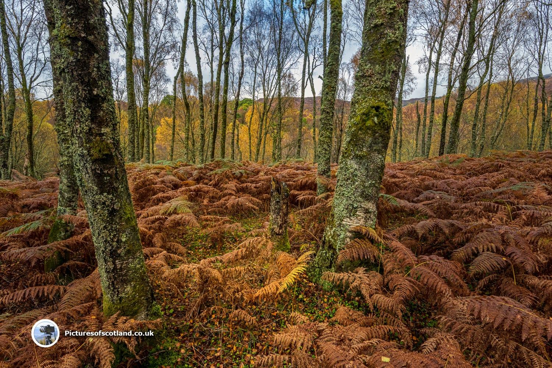 Little Druim Wood