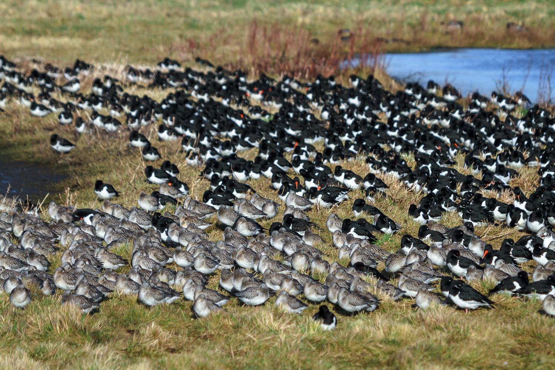 Birds Sheltering Together